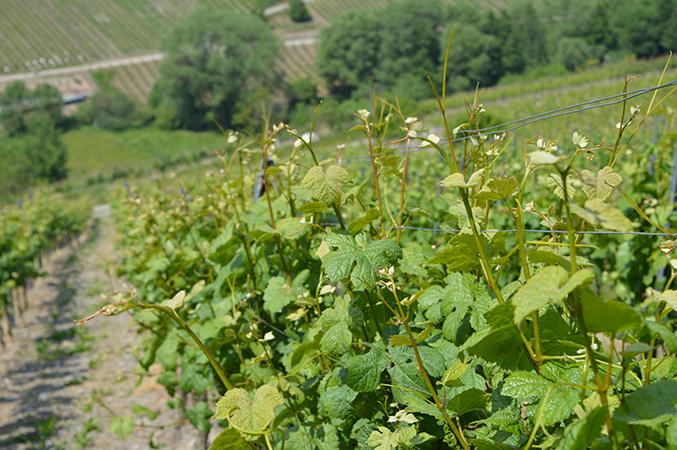 wijnvelden_1