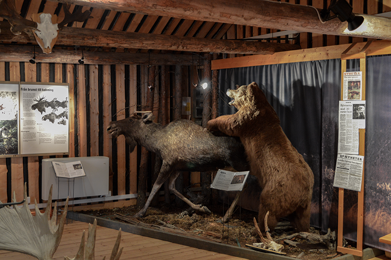 Älgens hus – Museum