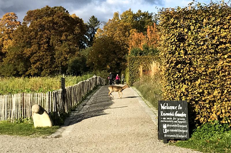 Rosendals Trädgård hertje